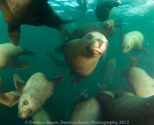 120115_Marine Life Sactuaries BC_0024
