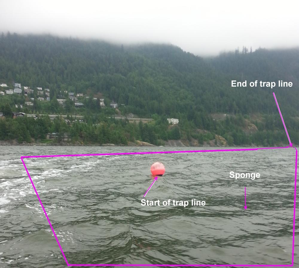 Prawn traps deployed in the area of the Kelvin Grove glass sponge bioherm