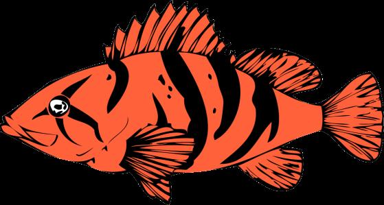 RockfishVector
